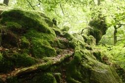 Forest Floor, UK. Copyright Maria Delaney