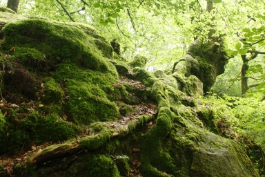 Forest Floor, UK. Copyright Maria Delaney
