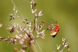 Beetle in Meadow, UK. Copyright Maria Delaney