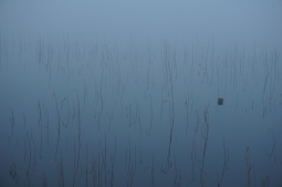 Reeds visible through thick fog on water